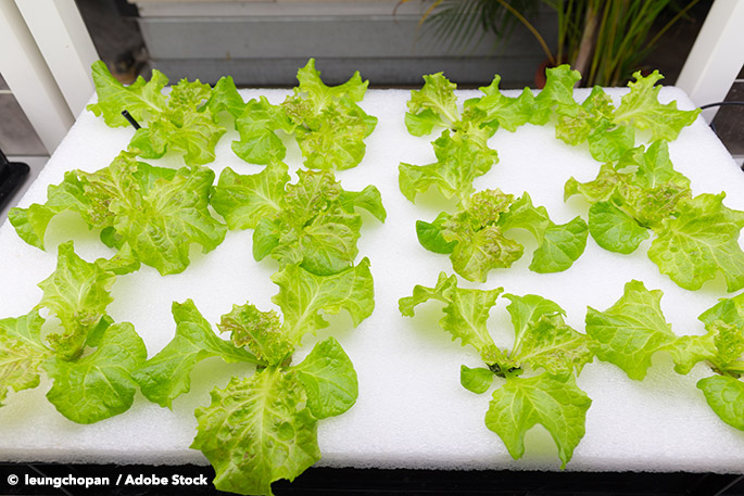 Can You Reduce Food Waste With Indoor Hydroponics? Ikea Thinks So