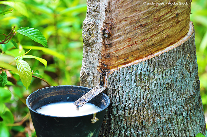Have Rubber Trees Become A Zero Waste Equation?