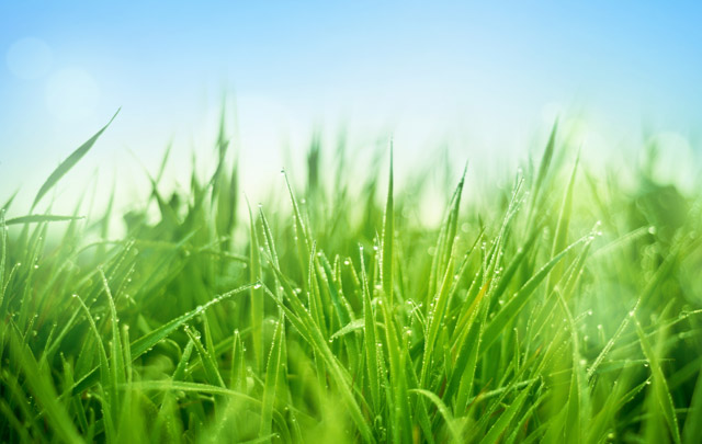 Have a greener lawn this Earth Day