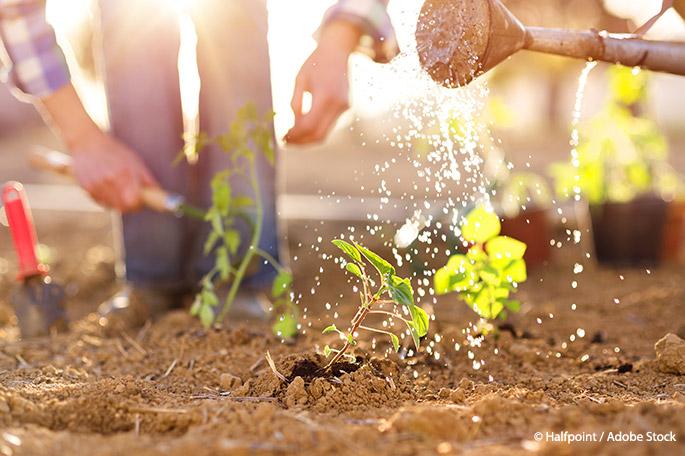 4 Ways to Create a Zero Waste Garden