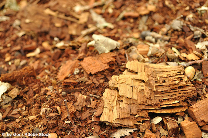Recycling wood pulp could create a cheaper carbon fiber
