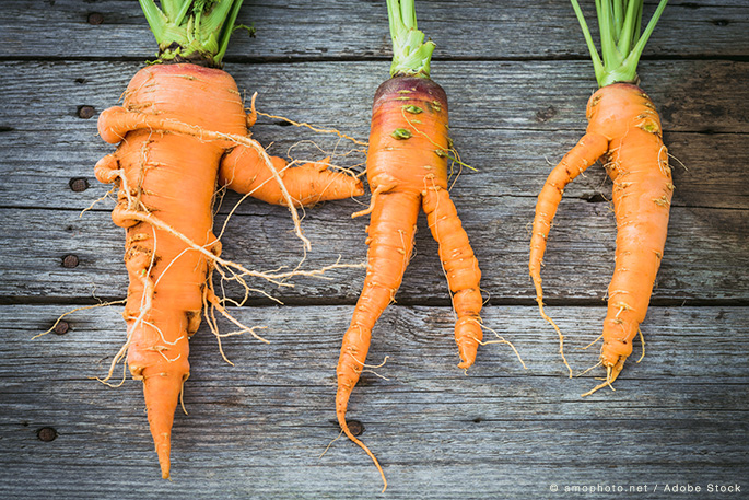 Cutting down Food Waste with Imperfect Produce