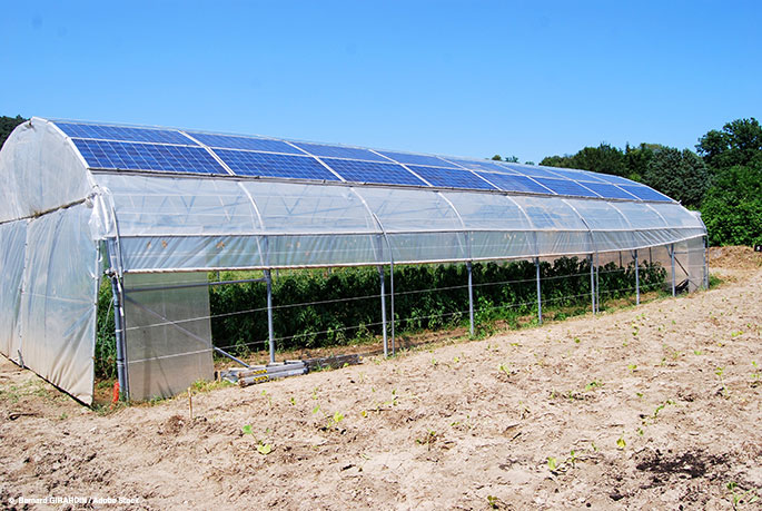 Could Solar Greenhouses Cut Down on Food Waste, and Create Sustainable Energy?