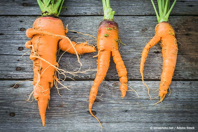 """The Invisible Food Waste: """"Ugly Food"""""""