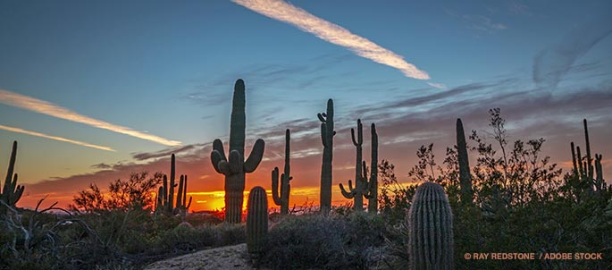 Could Cactus Plastic Be In Our Future?